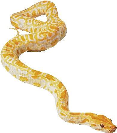 plush pet cómo limpiar bañar una serpiente