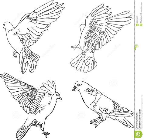 vector illustration  doves stock vector illustration  marriage grace