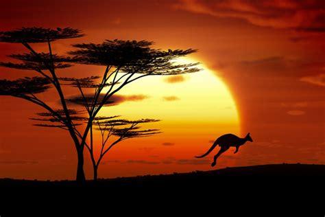 papier peint kangourou coucher du soleil australie