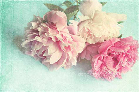 shabby chic flower shabby chic flower photography by sylvia cook blog modahausmodahaus