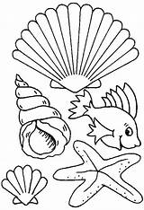 Coloring Pages Shells Beach Seashell Print Para sketch template