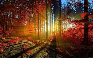 Wallpaper Sunset through the trees in autumn - My HD ...