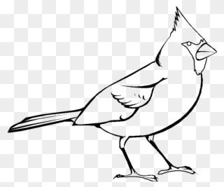 cute  bird clipart images  page  yanhe clip