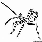 Insect Bug Clipart Coloring Assassin Pages Assasin Silverfish Clipground Template Kissing sketch template