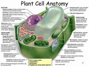 Cell   Structure And Function Part 01