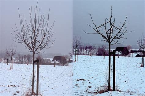 kirschbaum schneiden vorher nachher kirschbaum schneiden fruhjahr