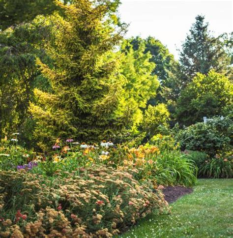 tough trees  midwest lawns midwest living