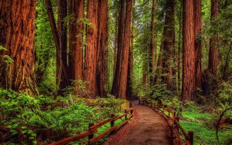 32 Redwood Hd Wallpapers