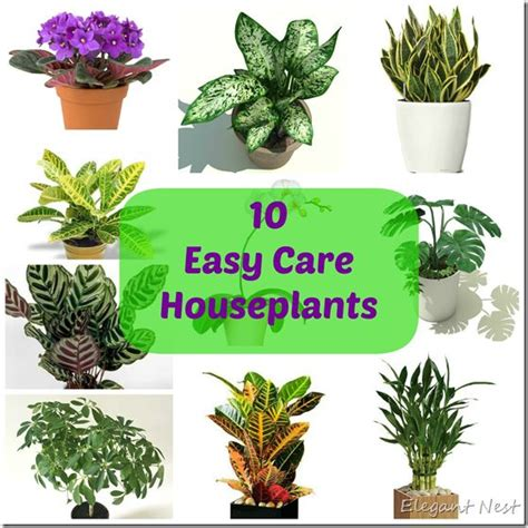 25 best ideas about easy house plants on