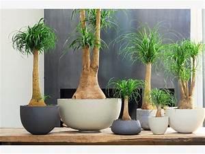 Pflegeleichte Pflanzen Für Die Wohnung : grose wohnzimmer pflanzen ~ Michelbontemps.com Haus und Dekorationen