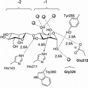 Schematic Diagram Of The Interactions Of Man26a Glu320gly