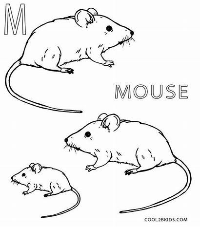 Mouse Coloring Pages Printable Cool2bkids Sheets Template