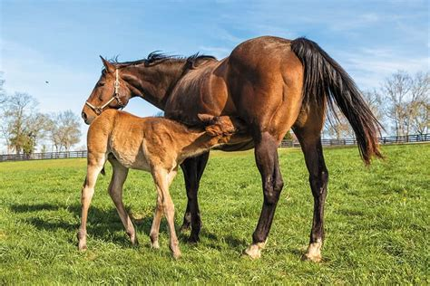 young foal horse mare digestive stall pasture should nursing health system problems recognize avoid understanding potential growing works help thehorse