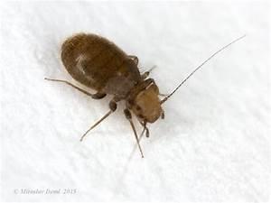 Insecte De Maison : identification petit insecte maison humide ~ Melissatoandfro.com Idées de Décoration