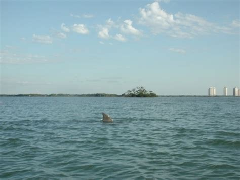 Naples Boat Rentals Groupon by Manatee Guides Fort Myers Fl Groupon