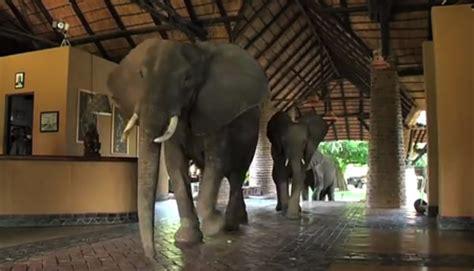 elephant butte hotel  worlds  hotels