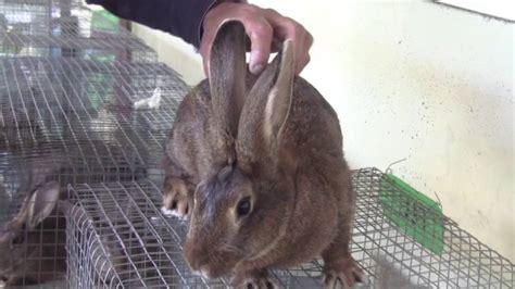 animale da cortile aprire store prodotti animali domestici e da cortile