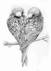 Drawings of Love Birds   Love Birds Drawing Love birds ...