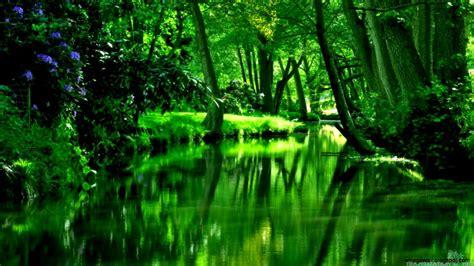 Nature Beautiful Green River Forest Hd Wallpaper Mega