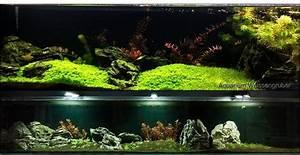 Aquarium Gestaltung Bilder : bild 4 aus beitrag architektur unter wasser ~ Lizthompson.info Haus und Dekorationen