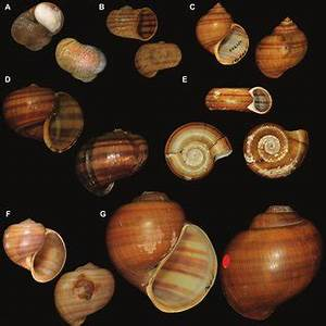 All Bearing Size Chart Pdf Pdf Types Of Ampullariidae Mollusca Gastropoda In The
