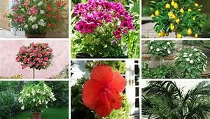 Oleander Draussen überwintern : k belpflanzen drinnen oder drau en ~ Eleganceandgraceweddings.com Haus und Dekorationen