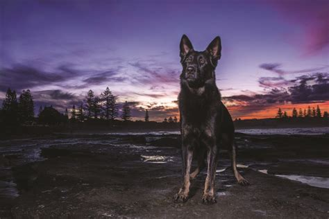 kaos as roma 10 meet the qps calendar dogs townsville
