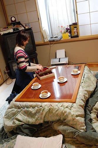 kotatsu neko cat love meow