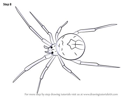 learn   draw  redback spider arachnids step  step drawing tutorials