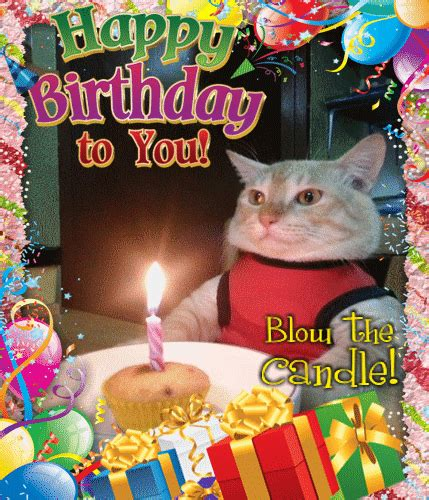 funny birthday cat blows  candle  funny birthday