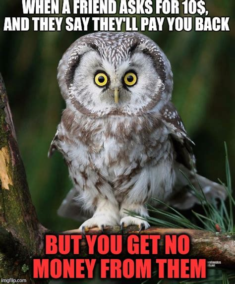 Owl Who Meme - related keywords suggestions for owl meme generator