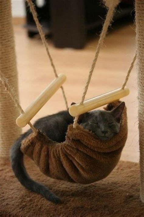 cat hammocks giving great inspirations  diy pet