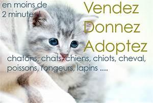 Site D Annonce Gratuite En France : anidonne i les petites annonces animaux ~ Gottalentnigeria.com Avis de Voitures