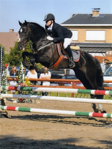 andalusian horse jumping pre breeds wikipedia horses breed