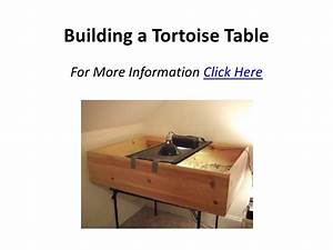 Building A Tortoise Table