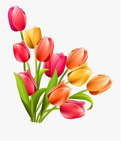 Tulips Easter Tulip Clipart Flower Clip Flowers