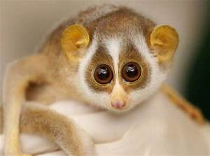 10 Cutest & Most Cuddly Exotic Pets