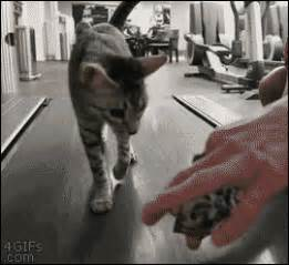 Catshow GIFs - Find & Share on GIPHY