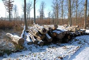 Bois De Chauffage Bricoman : bois de chauffage folkling gaubiving ~ Dailycaller-alerts.com Idées de Décoration