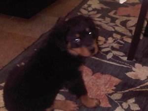 Pedigree Dog Food Feeding Chart Cooper A Love Of Rottweilers