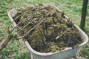 Different Types Of Animal Manure: Pros And Cons Of Using ...