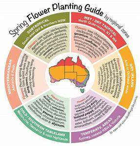 Spring Flowers Planting Guide By Temperate Regional Zones