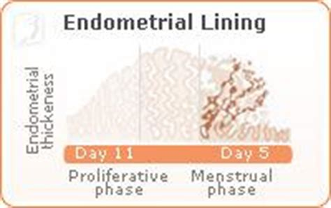 Shedding Of Uterine Lining After Menopause by The Effects Of Birth On Your Irregular Period