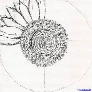 Draw a Sunflower, Realistic Sunflower, Step by Step ...