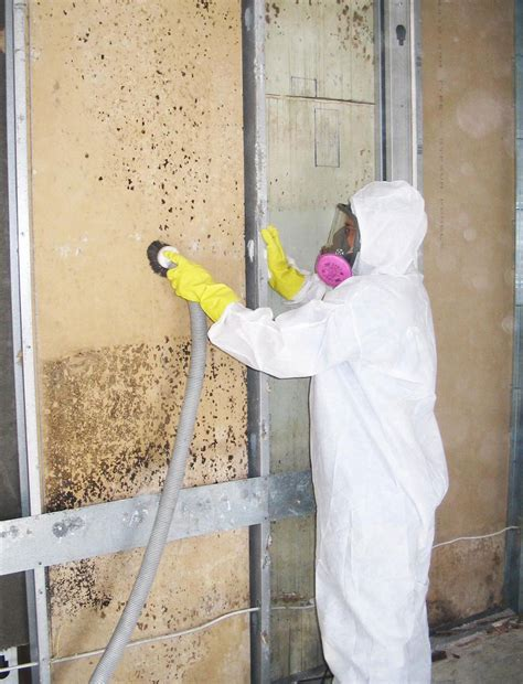 mold remediation american property restoration