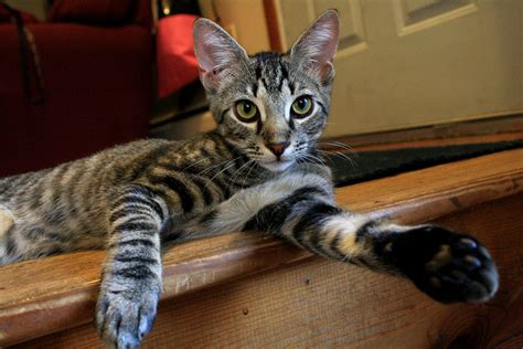 Pet Sitting Services Provided By Purrfect Pet Sitting, Llc
