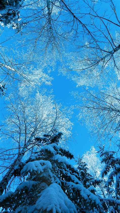 wallpaper winter   wallpaper forest fir tree snow