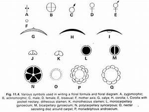 Top 14 Characteristics Of An Angiospermic Plant