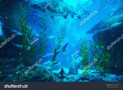 Bangkok Thailand July 16 2017 Sea Stock Photo 680370538