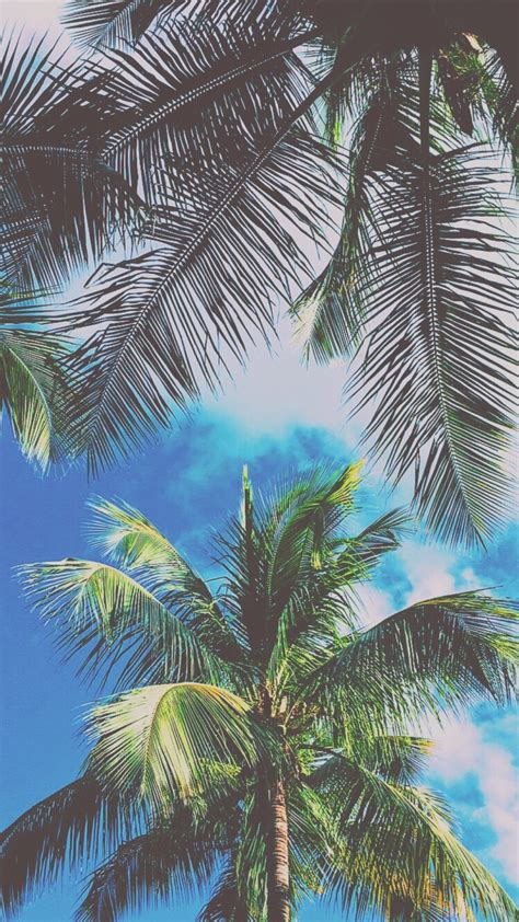 Dope Tumblr Backgrounds Palm Tree
